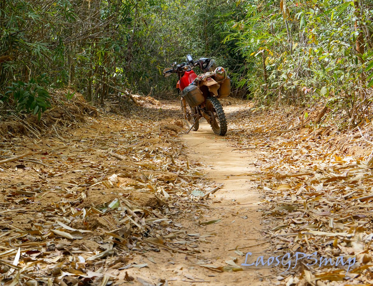 Ho Chi Minh trail Bamboo tunnel