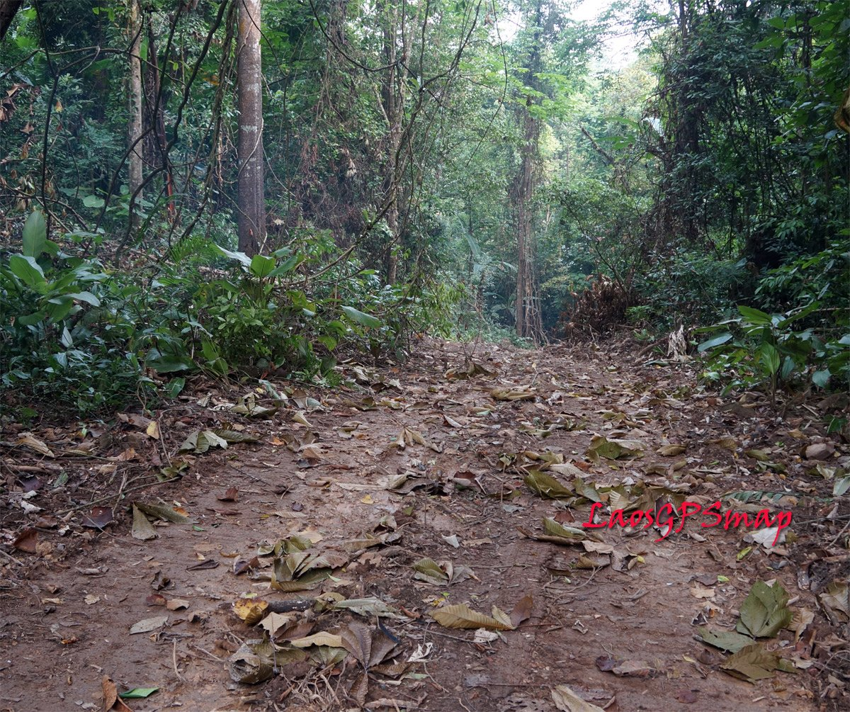 Secret war road passing through jungles